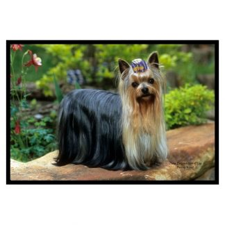 Yorkshire Terrier Mat