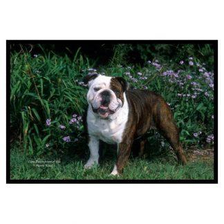 Bulldog Mat