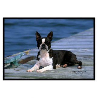 Boston Terrier Mat
