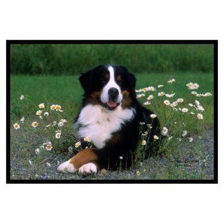Bernese Mountain Dog Mat