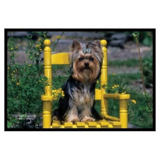 Yorkshire Terrier Mat - Puppy Cut